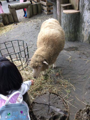 手渡しで羊に餌をやれる