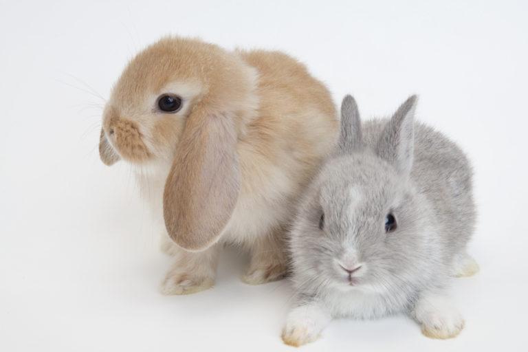 ウサギを飼いたい