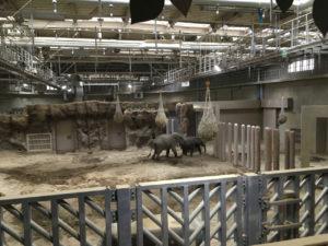 円山動物園の象舎はとても広い
