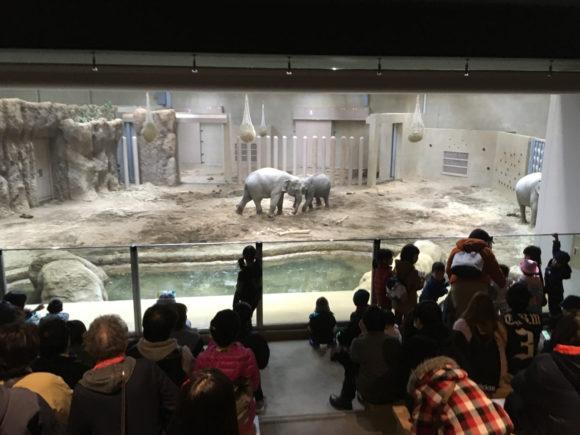象舎には観覧席があり、後ろからでも観やすい