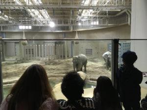 子供達も大喜びでゾウを見ている
