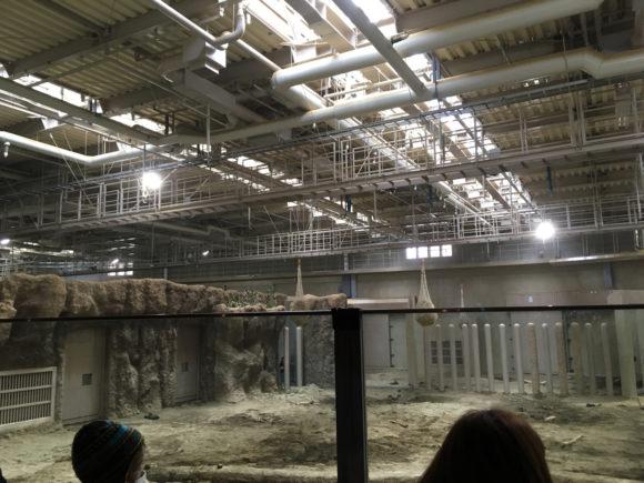 円山動物園の象舎は天井も高い