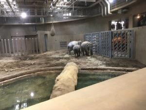 この寒いのに池になんか入りたくないよねーって話してそうなゾウたち