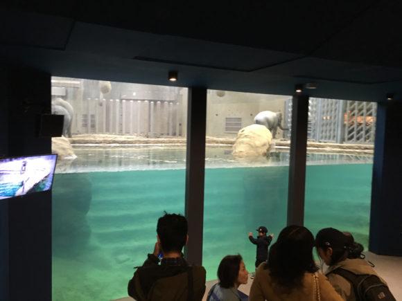 泳ぐゾウを見られるスペースもある